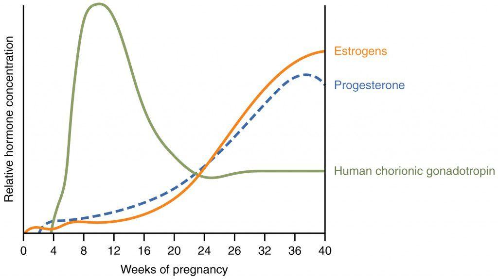 testosterone effects on men