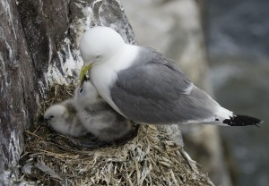 birds-nest-263160_1280
